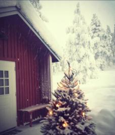 Stugan i Sälen med julgran