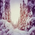 snö i ravinen